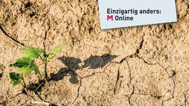 """Eine kleine grüne Pflanze inmitten eines vertrockneten Wüsetnbodens. Oben rechts der Slogan: """"Einzigartig anders: M Online"""""""